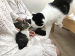 Японская IT-компания, по офису которой свободно разгуливают кошки