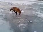 Рыбак из Владивостока делится корюшкой с лисицей - YouTube