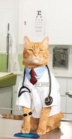 Врач просто врач, Врач просто врач