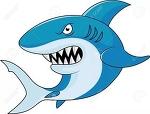 Gossip Shark, Gossip Shark