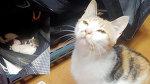 Хоккеист нашёл в своей сумке очаровательный сюрприз от местной бродячей кошки