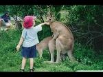 Дети в зоопарке- Самые смешные моменты!
