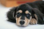 Почему собака - лучший друг человека? - Дай, Джим, на счастье лапу мне - Блоги - Sports.ru