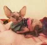 Больная кошка помогает другим животным в ветеринарной клинике. | ВМЖ