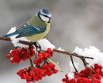 Биатлонная зима, Биатлонная зима