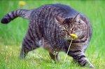 Занимательный случай про усатого охотника и честный бартер… Умный кот)