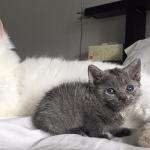 Мужчина приютил кошечку с редкой и милой привычкой