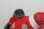 Маленькую выдру спасли из-под колёс! Теперь она веселится с пингвином и планирует забрать его жить в лес