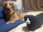 """В японском твиттере прошёл чемпионат упоротых животных в категориях """"кисики"""" и """"пёси""""."""
