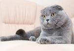 Ломаем голову больше недели, мог ли кот продумать такой изощренный план или это получилось случайно…