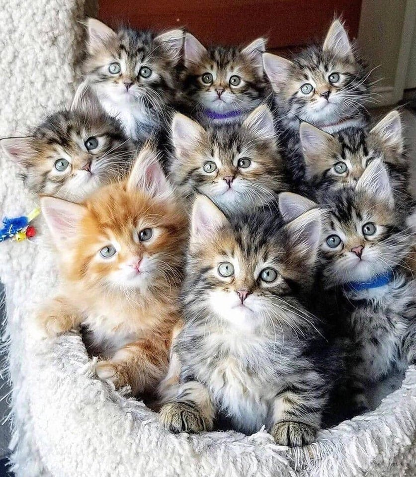 любая несколько фотографий одного котенка это полезный кисломолочный