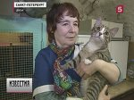 Петербург сразмахом отмечает День эрмитажного кота