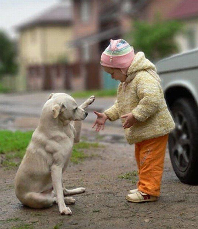 картинка как животные помогают друг другу ваши фотографии