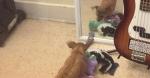 Фото с собакой, которая принесла игрушки своему отражению в зеркале, растрогало Сеть