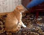 Лёва — самый мстительный кот на свете.