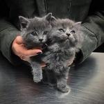 Счастливая история двух котят, спасенных от смертельных морозов