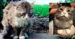Взгляд уличного кота разбил сердце девушке. Но он так боялся людей, что поймать его оказалось сложной задачей