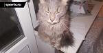 🐱 Законодательство от кота