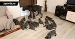 🐶 Многочисленное семейство