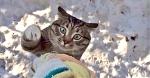 Возвращение блудного… кота! Когда питомец приходит домой, все соседи падают со смеху