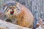 Кот загрыз трех грабителей насмерть: кровавая баня в Озерске