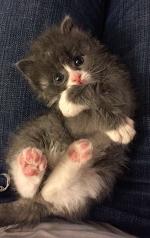 """Маленький кот по прозвищу """"Мышонок"""" родился совсем не обычным… И вот в кого он вырос сейчас"""