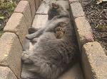 Кошка подружилась с бурундуком, и не хочет выпускать его из объятий