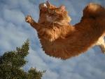 Операция по снятию кота с дерева завершена... Есть жертвы!)))