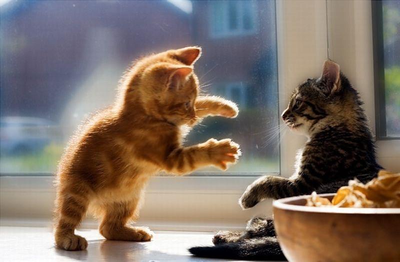 Прикольные картинки он и она коты, открытка