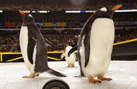Питтсбург, фото, НХЛ, видео