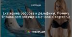 Екатерина Боброва и Дельфины. Почему Tribuna.com это еще и National Geographic - Белый Аист - Блоги - ua.tribuna.com
