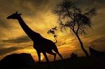 Африканский полёт - Стоп-кадр - Блоги - ua.tribuna.com